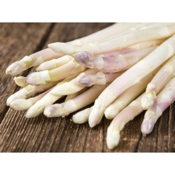 Asperges blanches de Fully